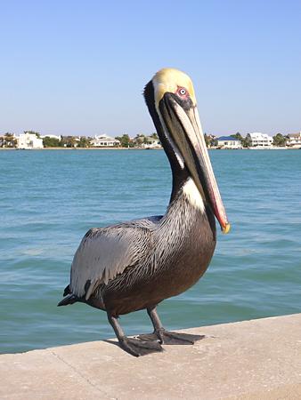 Florida Wildlife Vr360 Florida Vacation Rentals
